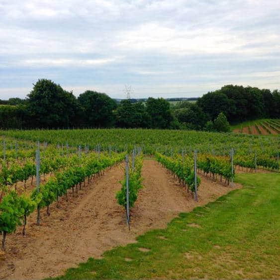Dansk vingård MODAVI vinsmagning