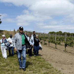 Vinsmagning på Dansk vingård i Kalundborg